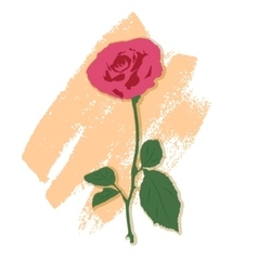 a rose vector image