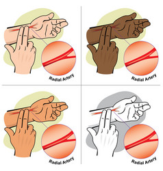 first aid person measuring pulse radial artery vector image