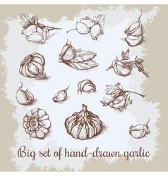 hand drawn big garlic set Vintage retro background vector image