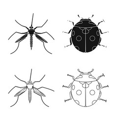 Isolated object of insect and fly symbol vector