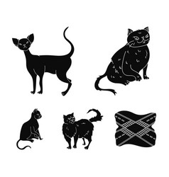 persian cornish rex and other species cat breeds vector image