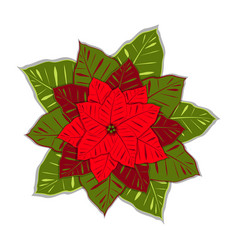 poinsettia euphorbia pulcherrima new year vector image
