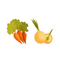 Cartoon style carrot and bulb onion vegetables vector