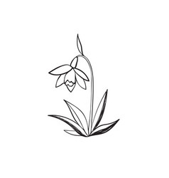 Snowdrop sketch icon vector
