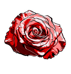 beautiful red rose hand-drawn vector image