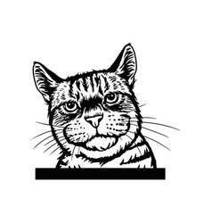 cheeky cat - cat peeking out - face head isolated vector image