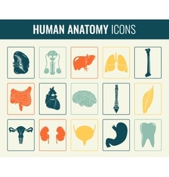 Human internal organs Anatomy set vector image