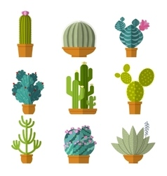 collection of cactus in flat style vector image