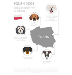 Dogs country origin polish dog breeds vector