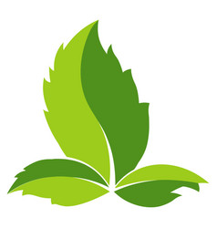 green leaf logo template icon leaf vector image