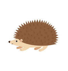 hedgehog on white vector image