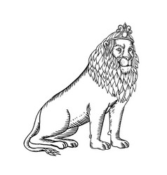 Lion sitting wearing tiara etching black and white vector