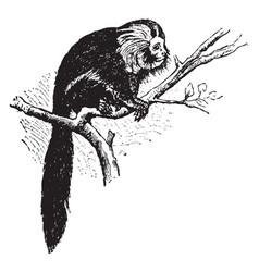 red ape vintage vector image