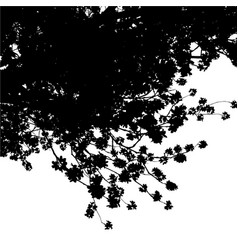 sakura tree black silhouette on white background vector image