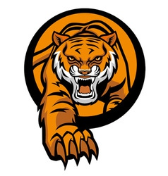 tiger mascot come out from circle vector image vector image