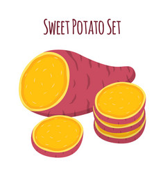 brown batat sweet potato fresh natural root vector image