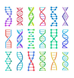 colorful dna icon and structure spiral vector image