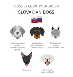 Dogs by country belgium 1 vector