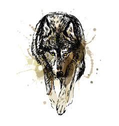 colored hand sketch walking wolf vector image vector image