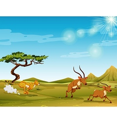 Cheetah chasing deers in the savanna vector