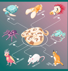 exotic pets isometric flowchart vector image