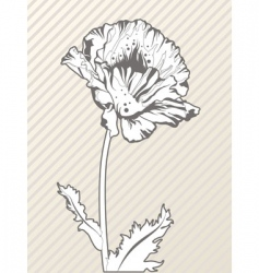 hand drawn poppy flower vector image