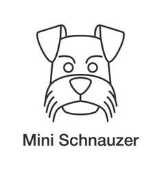 miniature schnauzer linear icon vector image