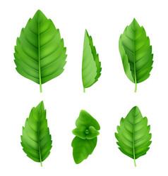 Mint leaves realistic closeup spearmint nature vector