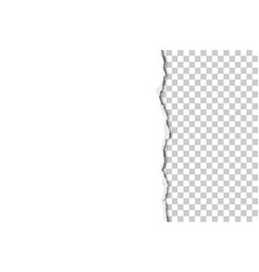 Part sheet white paper torn from up vector