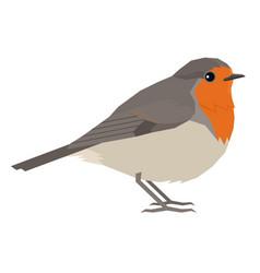 Robin bird isolated object vector