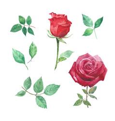 Set watercolor rose hand-drawn elements vector