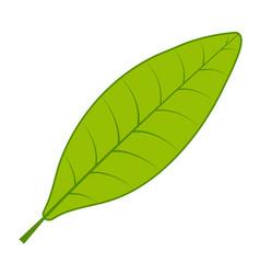 Tea green leaf tree leaf on white vector