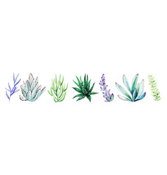 Watercolor set bright hand drawn succulents vector