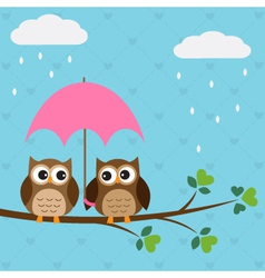 Owls couple under umbrella vector image vector image