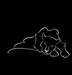 lying sweetheart black panther in the night vector image