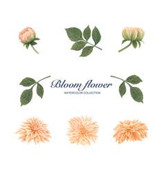 Bloom flower element design watercolor on white vector