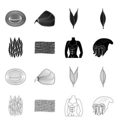 Design fiber and muscular symbol set of vector