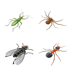 design insect and fly symbol collection vector image
