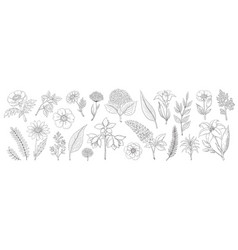 hand drawn flowers vintage floral sketch summer vector image