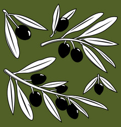 olive tree branches with olives vector image