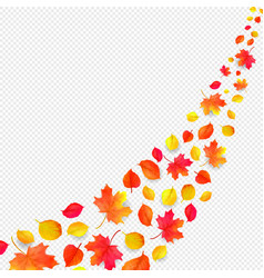 yellow leaves falling from sky in white vector image