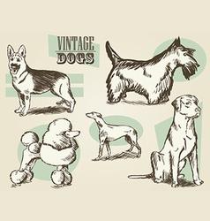 Vintage dog etchings vector