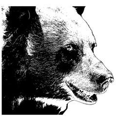 bear head realistic vector image