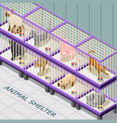 Cat shelter isometric background vector