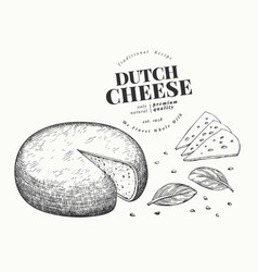 dutch cheese hand drawn dairy engraved style vector image
