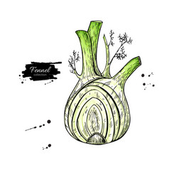 Fennel hand drawn isolated vector