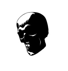 skull image vector image