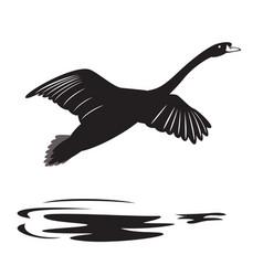 Swan 2 vector