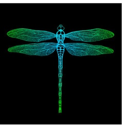 dragonfly2 vector image vector image