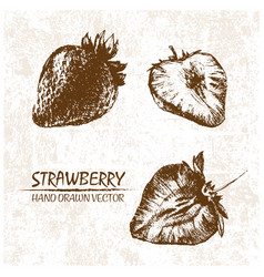 digital detailed strawberry hand drawn vector image vector image